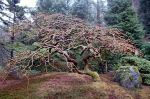 Free admission day portland japanese garden all ages - Portland japanese garden admission ...