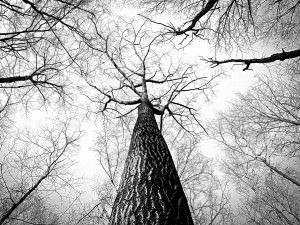 Do the trees speak to you? @ New Renaissance Bookstore