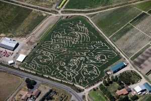 Bella Organic Corn Maze 2014