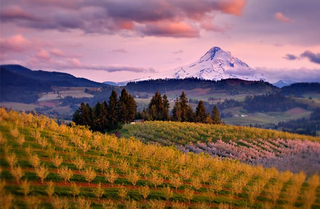 willamtte valley oregon