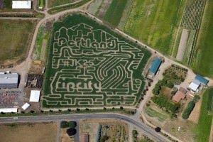 Bella Organic Rip City corn maze honoring JK25 2015 new