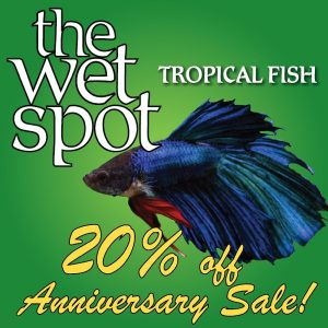 2015 Wet Spot Tropical Fish Anniversary Sale