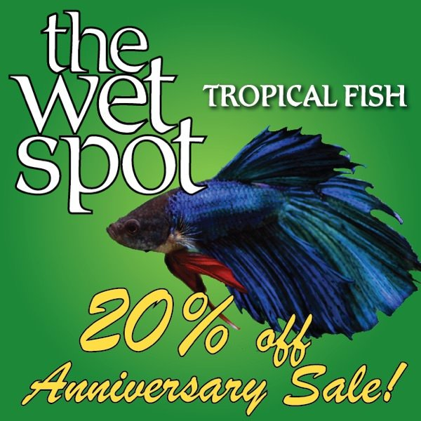 2015 wet spot tropical fish anniversary sale 20 off for Wet spot fish
